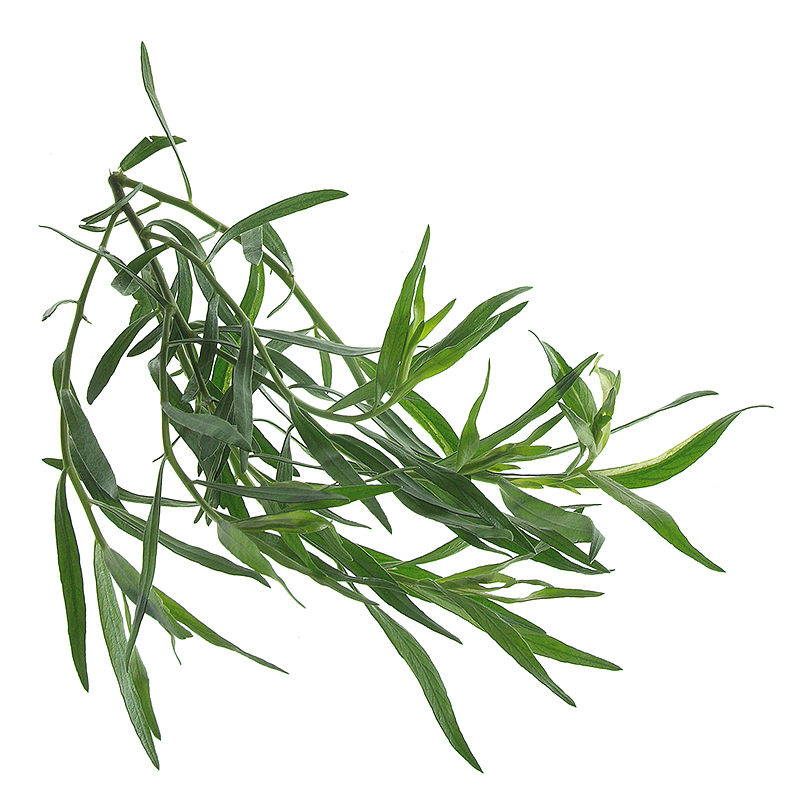 Tarragon whole leaves